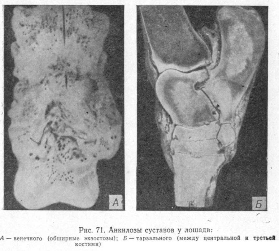 Ветеринария болезни суставов тренажёр для коленного сустава