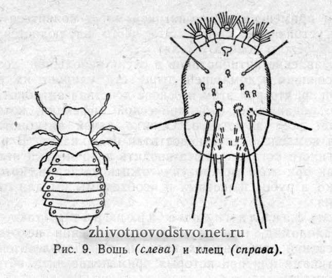 внутренние паразиты человека