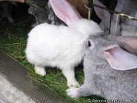 rabbits-kroliki-0215
