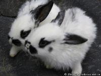 rabbits-kroliki-0364