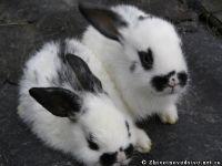 rabbits-kroliki-0365