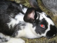 rabbits-kroliki-3843