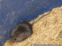 mouse-mysh-6426