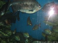 fish-ryba-2101