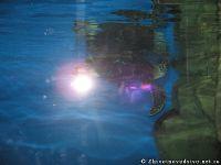 fish-ryba-2102