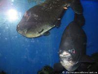 fish-ryba-2104