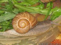 snail-ulitka-7582