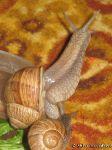 snail-ulitka-7587
