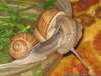 snail-ulitka-7588