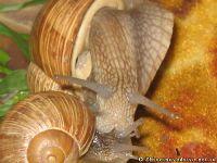 snail-ulitka-7590