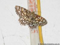 butterfly-babochka-8265