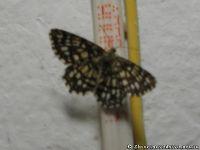 butterfly-babochka-8267