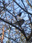 sparrows-vorobi-0053