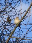 sparrows-vorobi-0060