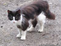 cat-cat-koshka-kot-1754