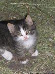 cat-cat-koshka-kot-8576