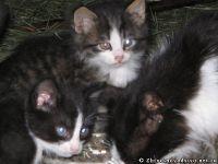 cat-cat-koshka-kot-8592