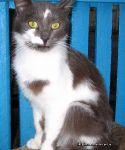 cat-cat-koshka-kot-8593