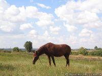 horse-horse-loshad-kon-1430