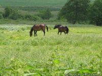 horse-horse-loshad-kon-8402