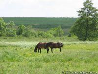 horse-horse-loshad-kon-8403