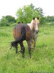 horse-horse-loshad-kon-8615