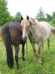 horse-horse-loshad-kon-8616