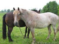 horse-horse-loshad-kon-8617