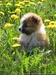 dog-puppy-sobaka-schenok-0980