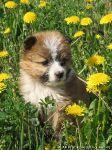 dog-puppy-sobaka-schenok-0986