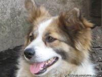 dog-puppy-sobaka-schenok-8559