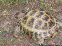 tortoise-turtle-cherepaha-cherepashka-9566
