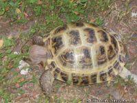 tortoise-turtle-cherepaha-cherepashka-9567