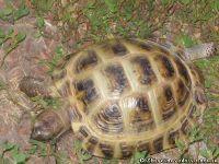 tortoise-turtle-cherepaha-cherepashka-9568