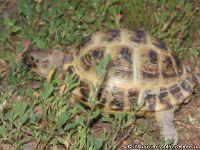 tortoise-turtle-cherepaha-cherepashka-9571