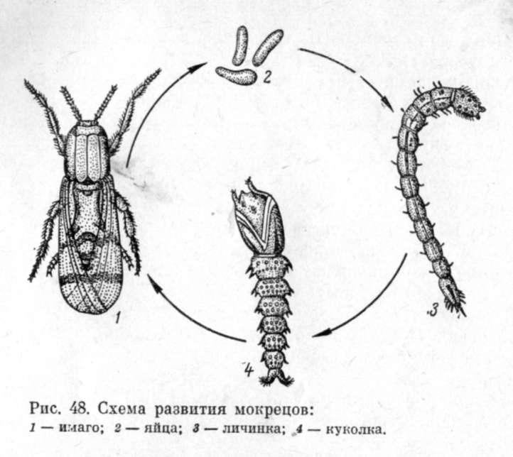 насекомых (1-3 мм длины).