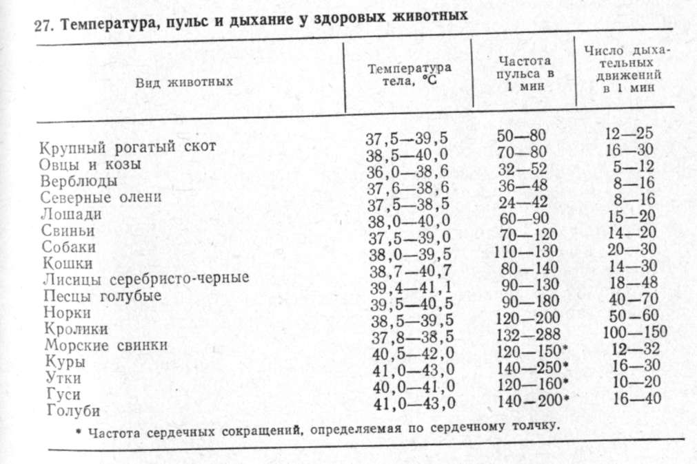 4geo  Карта и телефонный справочник Череповца