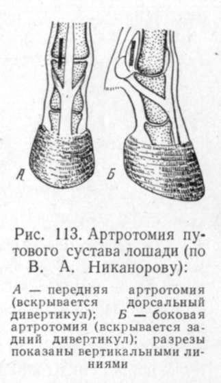 артротомия путового сустава лошади