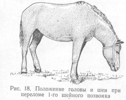 Вывихи суставов у лошадей почему ломит суставы