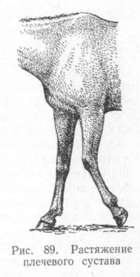 Артроз плечевого сустава у лошади ортез на коленный сустав цена екатеринбург