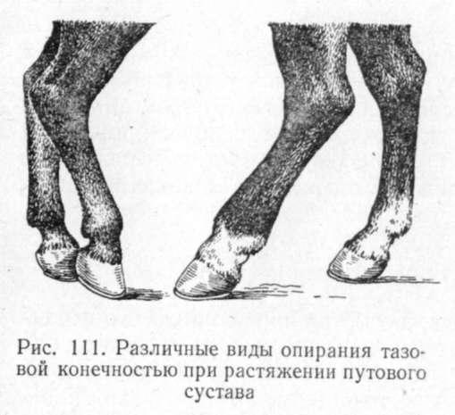 Лошадь подвывих путово-венечного сустава аппарат лазерный физиотерапии для суставов