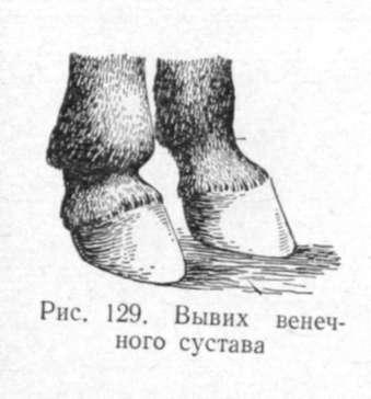 Болезни путового венечного и копытного сустава отек на косточке сустава стопы