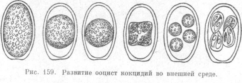 http://zhivotnovodstvo.net.ru/p/333-174.jpg