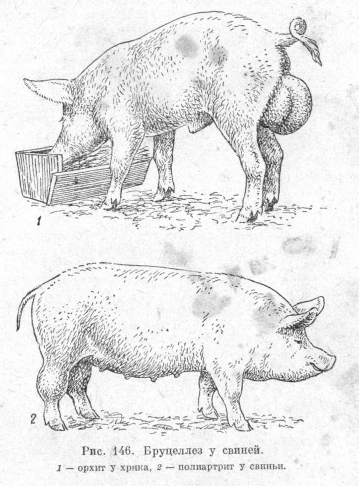 профилактика у коз от глистов