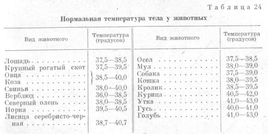 норма температуры тела у кошек таблица