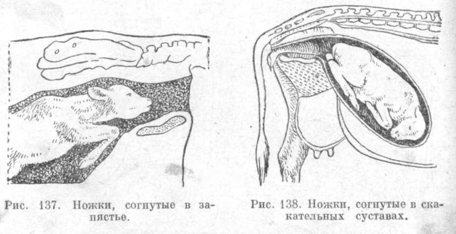 vipadenie-vlagalisha-prichini-lechenie-krs