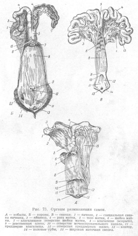 Процесс полового акта человека 1 фотография