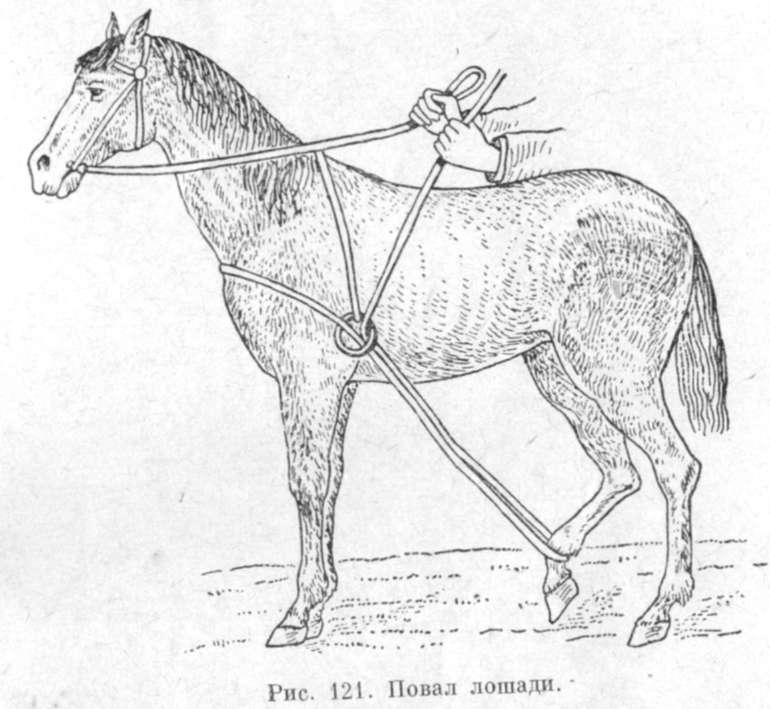 Недоуздок для лошади своими руками схема 97