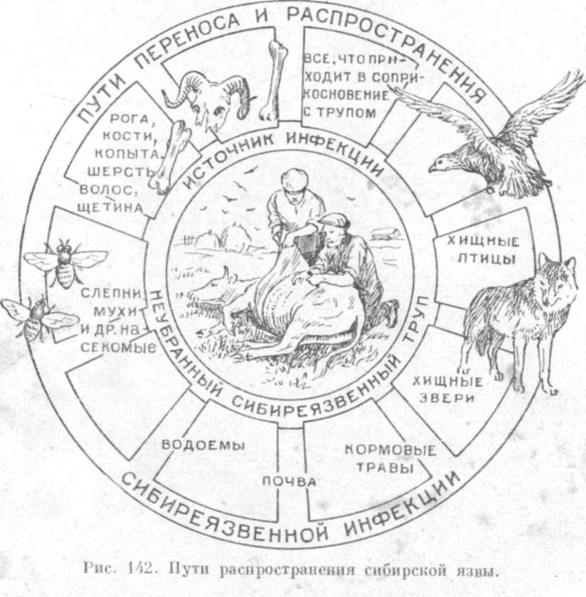 http://zhivotnovodstvo.net.ru/p/puti-rasprostraneniya-sibirskoj-yazvy-157.jpg