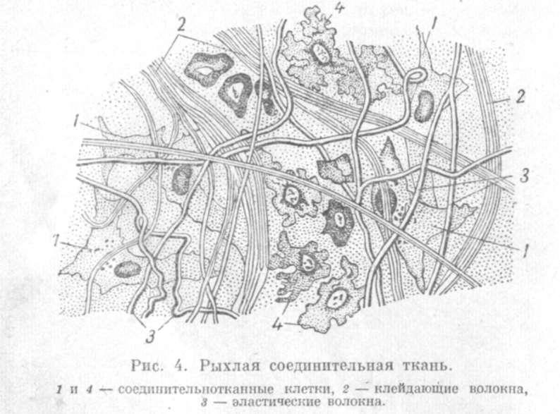 Ткань Эластическая